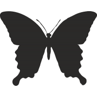 Бабочка 30