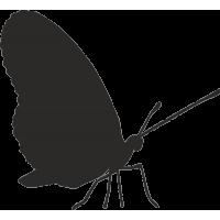 Бабочка 37