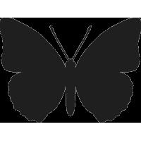 Бабочка 41