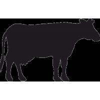 Степная Корова