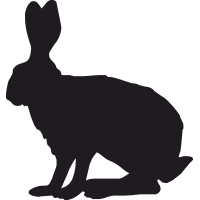 Заяц-русак 3