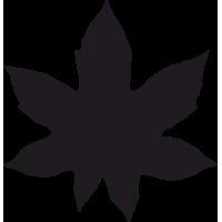 Листья Клена 1