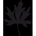 Листья Клена 4