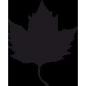 Листья Клена 5