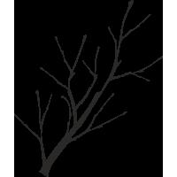 Ветка деревья